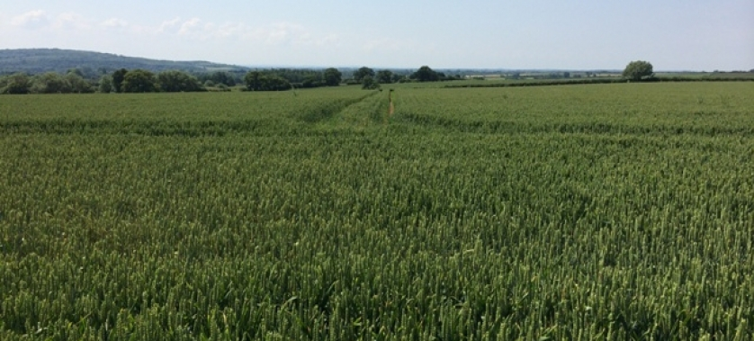 Growing Crops with Digestate