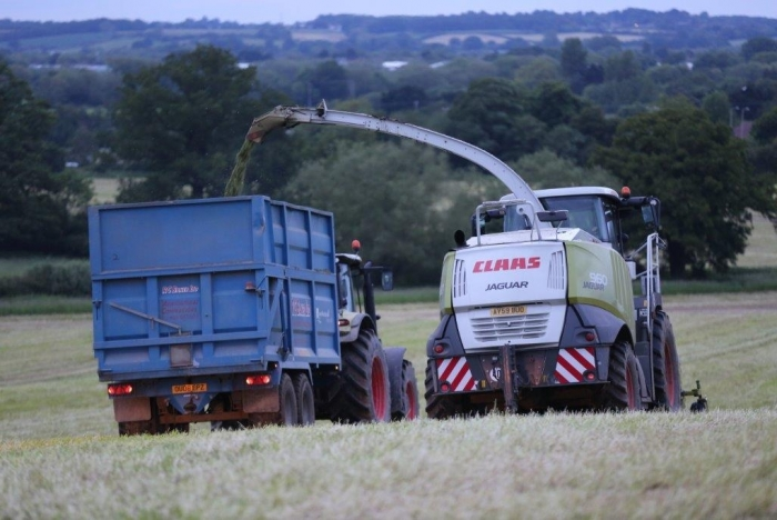 Frist Cut Grass Silage 2014