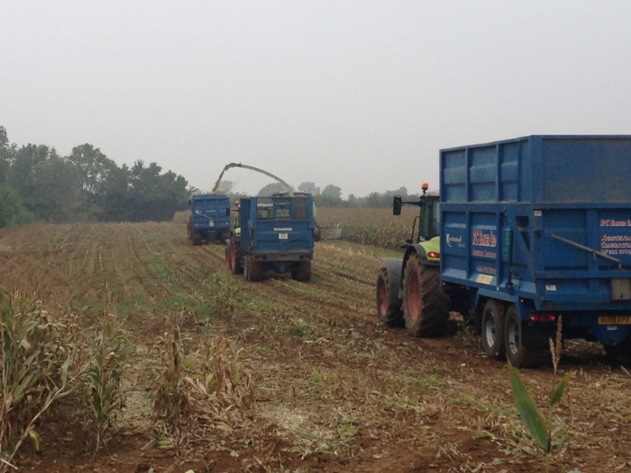 First of the maize silage 2012