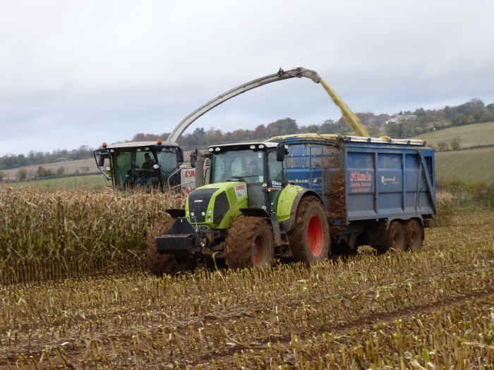 Maize silage 2012