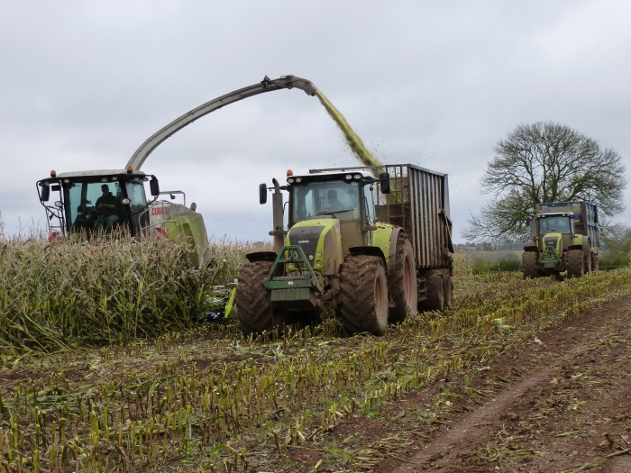 Silage team