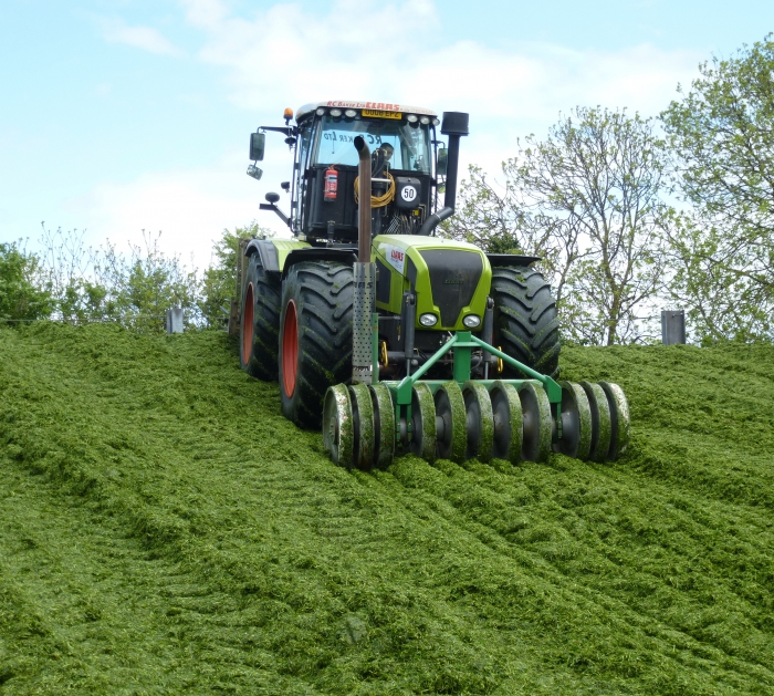 Xerion and SiloPactor rolling and compacting the clamp